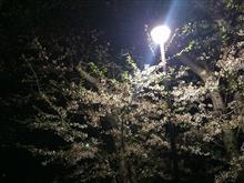 休日の過ごし方と夜桜オフ!≧∀≦)b