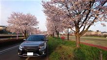 続・桜とPHEV