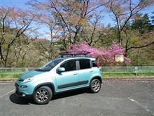自然と桜を求めてドライブへ( ^o^)ノ