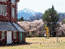 清春芸術村と神田の大糸桜、九州にエール!