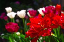 華やかな春~(^_^)