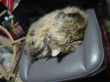 ポルシェに乗ったネコってか♪