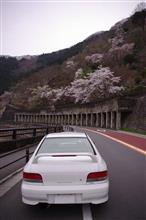 今年の桜旅