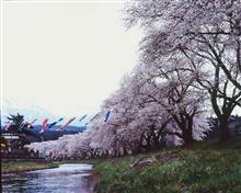バケペンで撮った今年の桜