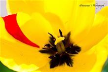 Colorful! 〜清明の花たち その2〜
