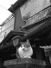 猫 (2016.4.29)