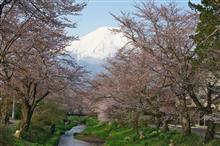 富士山桜ドライブ