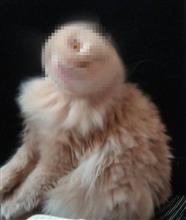 とんでもない瞬間を撮影してしまった怖すぎるネコが話題に