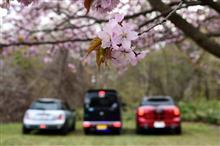 桜の下で会いまShow!2016