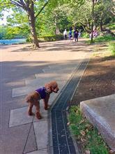 三ツ池公園散歩