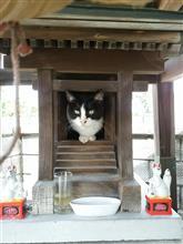 小夏、猫神様に昇格する