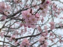 桜並木とDEMIO…