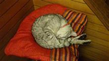 猫の居る風景・・・ 20 ようやく元の姿に・・・