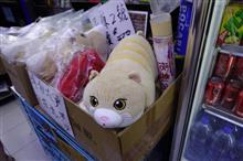 香港の有名猫、「クリーム兄貴」を見に行ってきた
