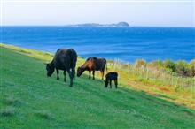 其処は、青い海と緑の牧場