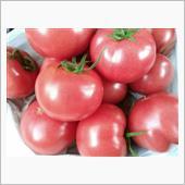 とまと畑のとまとさんのトマト