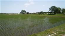 印旛沼の畔