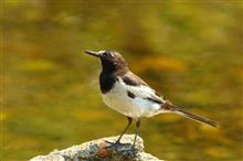 鳥撮り散歩(5月22日)