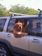 あまりに渋すぎる「オッサン犬」の画像がネットで話題に!