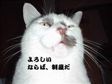膝神さま・・・・(´・ω・`)