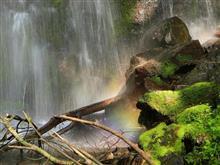 標高1600㍍八ヶ岳の沢で野鳥撮影