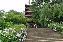 紫陽花撮影~本土寺