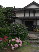 プチ撮りオフ:千光寺の紫陽花