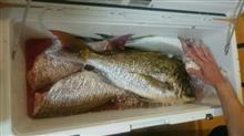 2016年 釣行2回目 お食い初めの鯛を釣りに 2016.06.17