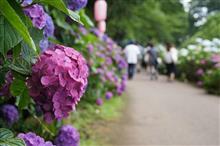週末の出来事(ナイトミーティング & あじさい公園散策)