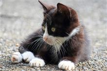 小猫ウォッチング