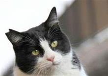 野良猫増加に「脱・殺処分」の一手…大阪・曽根崎で34匹に一斉不妊手術 被害コリゴリ、平和的共存で招き猫に