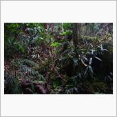 マレーシアのジャングルで迷子 ...
