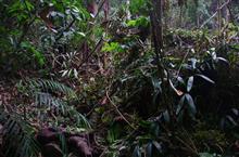 マレーシアのジャングルで迷子になった話