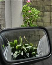 第四百八十二巻 梅雨は紫陽花