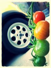 プチトマトとMINI、