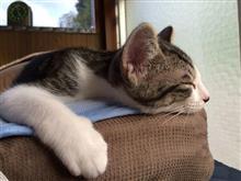 猫のいる生活4