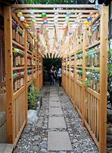 川越氷川神社、縁むすび風鈴を見に。