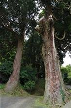 木霊が住んでいそうな・・・籾山八幡社の大欅