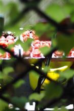◎ 土用の梅の日