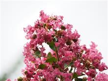 ある「ものがたり」のあるお花