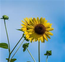 あの花を見に、樫原湿原へ。