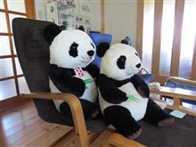 我が家にパンダがまた一人増えました… 今度はデカイよ~