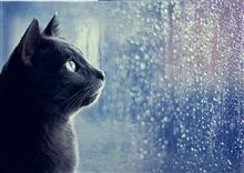 大雨なので今日は 三菱-500 と 防滴カメラで趣味三昧。