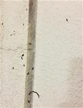 虫…((((;゚Д゚)))))))