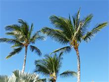 ハワイ島後半  マウナケア山編