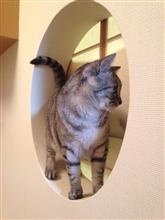 猫ジャンプ!