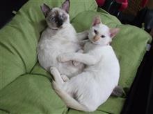 猫ちゃん。。。姉妹。。。ツーショット。。。