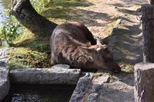 奈良観光♪