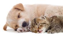 """犬と猫の居る風景・・・ オッサンの一番幸せな""""ひと時""""・・・ ※ 動画付"""