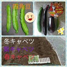 四角豆&秋野菜収穫&3種キャベツ植え